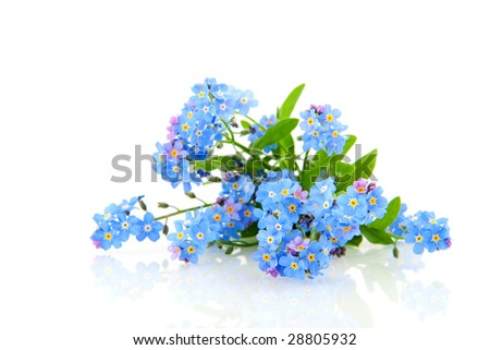 Blue forget me not flowers - stock photo