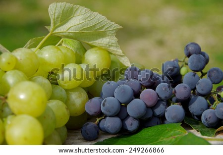 Blue grapes and green grapes on wooden table - stock photo