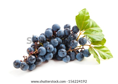 blue grapes with leaf on white background - stock photo