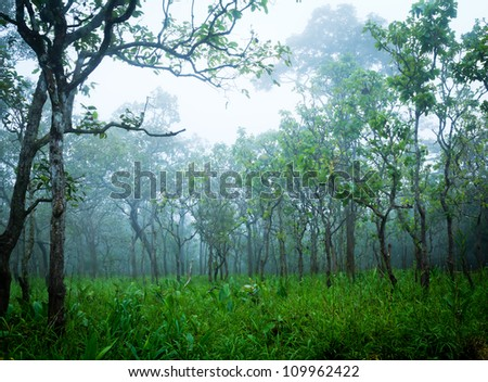 blue haze in highland tropical forest, Chaiyaphum Province, Thailand. - stock photo