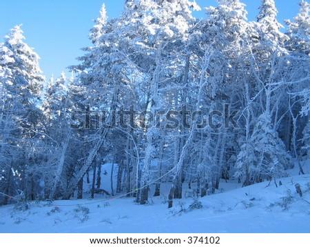 Blue ice trees - stock photo