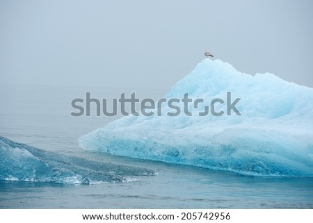 blue iceberg floating in alaska