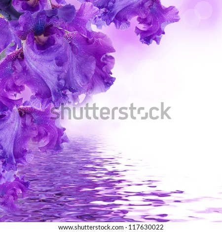 Blue irises against a green grass, a summer butterfly - stock photo