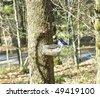 Blue Jay on Feeder - stock photo