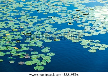 Blue lake covered in lily pods - stock photo