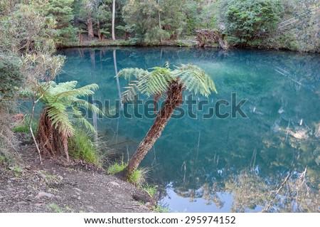 Blue Lake, Jenolan Caves, Australia NSW -  home to several platypuses - stock photo