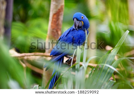 Blue macaw parrot sitting on a branch - stock photo
