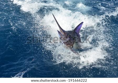 BLUE MARLIN FISH 2 - stock photo