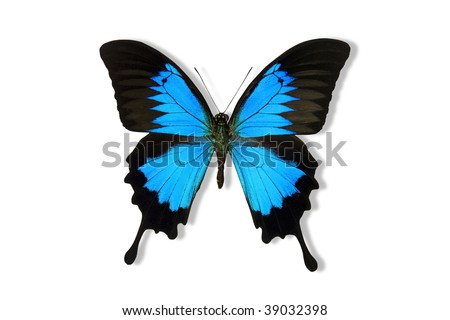 Blue Mountain Butterfly isolated on white. Clipping path included - stock photo