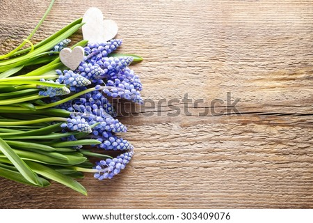 Blue muscari flowers (Grape Hyacinth) on wooden background, copy space - stock photo