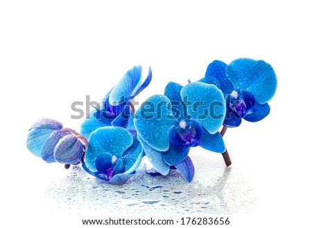 Blue orchid with reflection in water on white background - stock photo