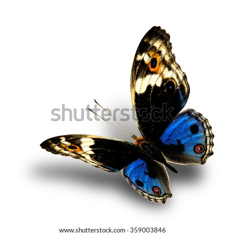 Blue Pansy (Junonia orithya) the beautiful flying blue butterfly with nice soft shadow beneath on white background - stock photo