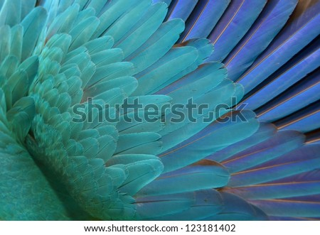 Blue Parrot Feathers. Background - stock photo