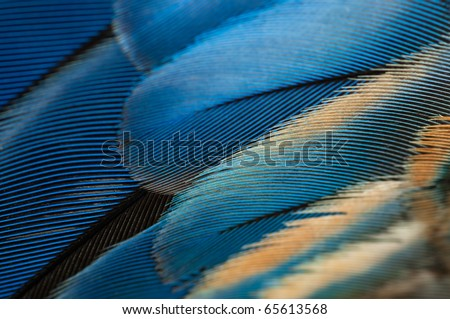 Blue parrot feathers texture - stock photo