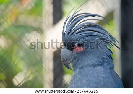 blue parrot is in the cage and not happy - stock photo