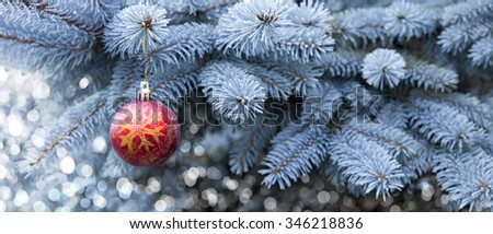 Blue Pine branches and red Christmas ball.Christmas winter background.