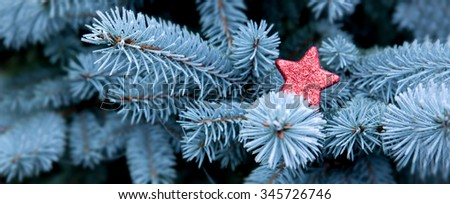 Blue Pine branches and red Christmas star.Christmas winter background.