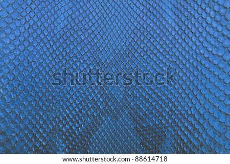 Blue python snake skin texture background. - stock photo
