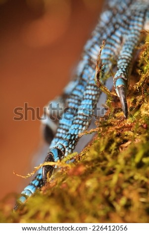 Blue reptile claws - stock photo