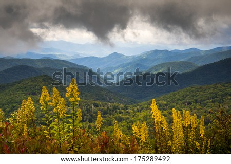 Blue Ridge Parkway NC Photography North Carolina Scenic Landscape featuring goldenrod in bloom at the start of autumn in the Appalachian Mountains - stock photo