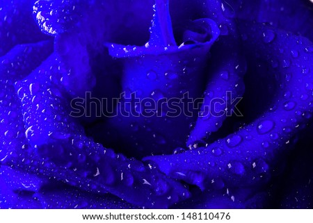 Blue rose with water drops. Close up. - stock photo