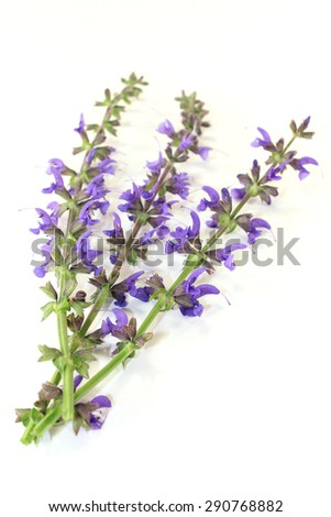 blue sage flowers on a bright background - stock photo