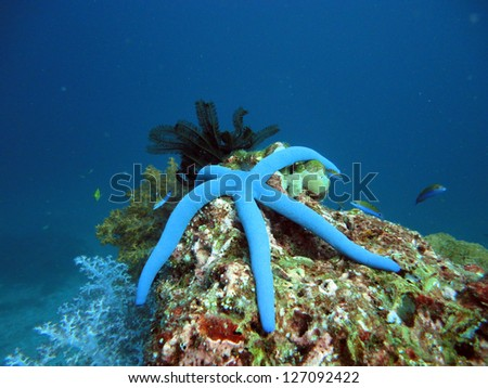 blue sea star at the underwater coral reef - stock photo