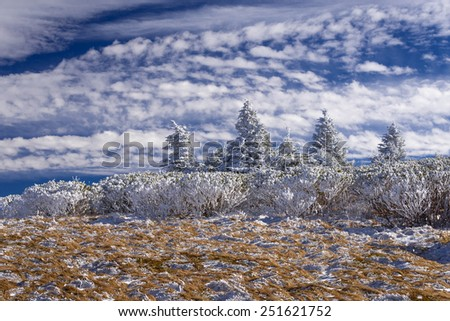Blue skies at the top of Grassy Ridge at Roan Mountain on a sunny winter afternoon in the Great Smoky Mountains National Park. - stock photo