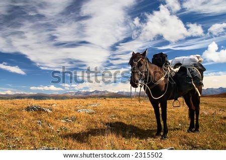 Blue sky, horse and mountains. Altay. Russia. - stock photo