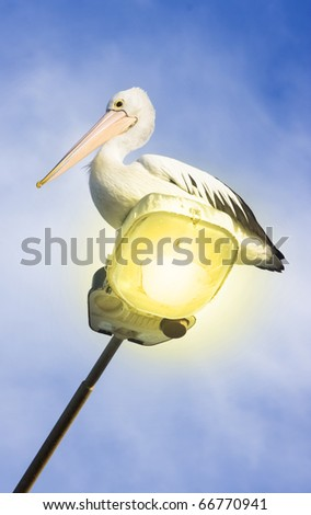 Blue Sky Lies Behind A Australian Pelican Sitting On A Beach Front Lamp Post - stock photo