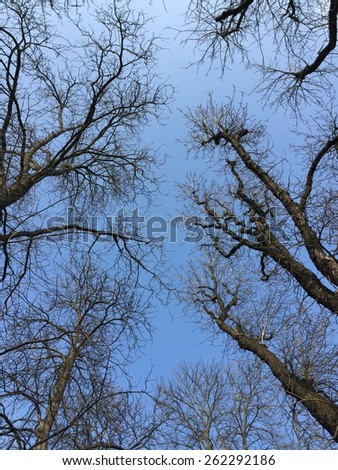 Blue sky over silhouettes of trees - stock photo