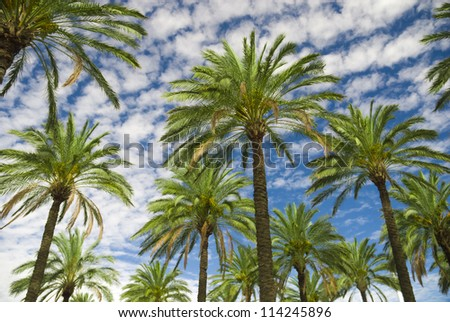 Blue sky palm trees in tropical summer - stock photo