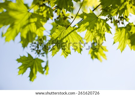 blue sky through green foliage