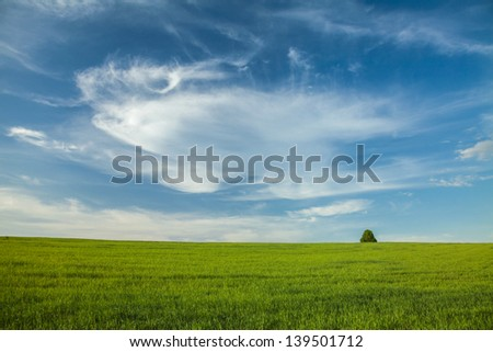 Blue sky with beautiful clouds, green field and lonely tree - Landscape - stock photo