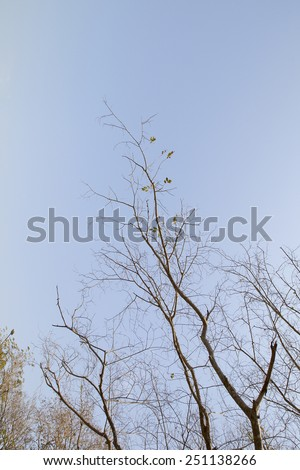 Blue sky with dry tree - stock photo