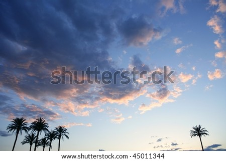 Blue sky with pink gray clouds sunset and palm trees - stock photo