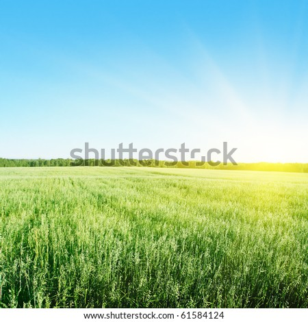 Blue sky with sun and field of green wheat. - stock photo