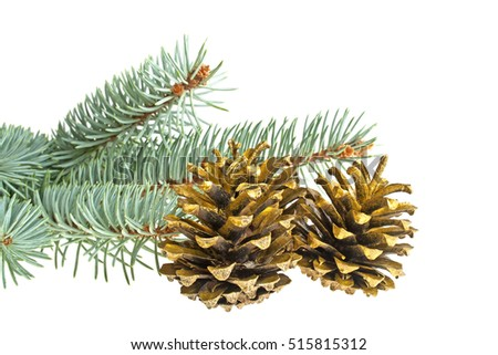 Blue spruce twig and golden pine cones isolated on a white background. Christmas decoration.