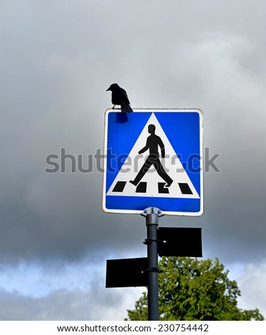 Blue square traffic sign for pedestrian crossing with silhouette of crow on background of dark sky. Grim omen - stock photo