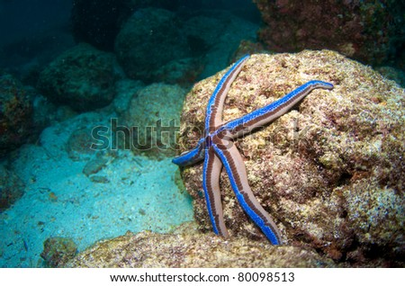 Blue Starfish on the Coral - stock photo