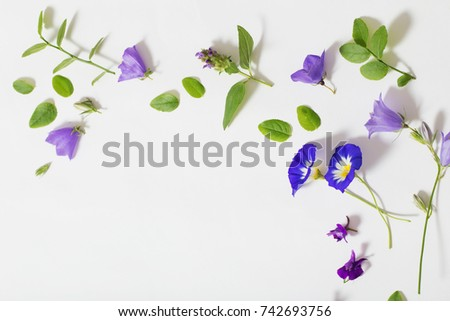 blue summer flowers on white background