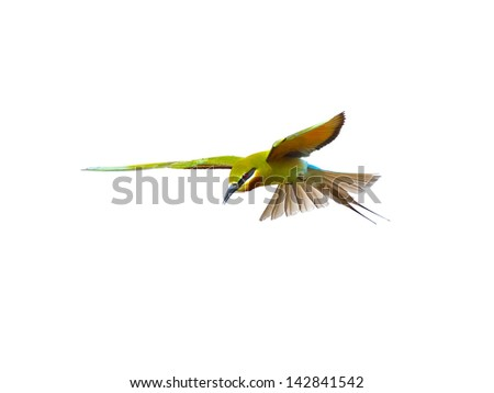 Blue-tailed Bee-eater in flight isolated on white background - stock photo