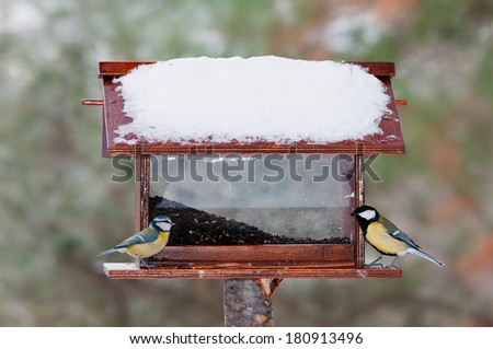 Blue tit and great tit at a feeder in winter - stock photo