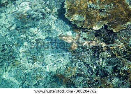 Blue water and coral texture