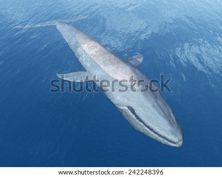 Blue Whale Computer generated 3D illustration