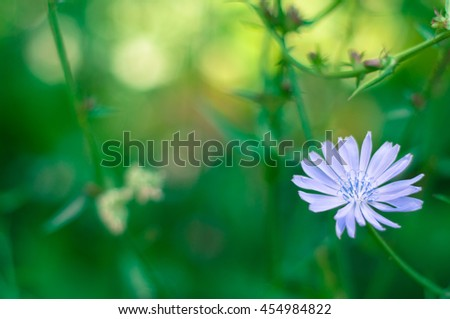 Blue wild flower   - stock photo