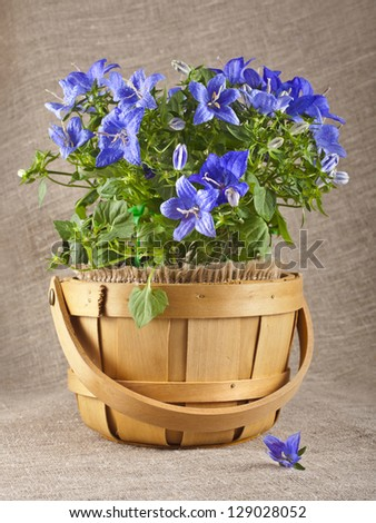 bluebell campanula flowers on natural linen burlap  texture background with copyspace - stock photo