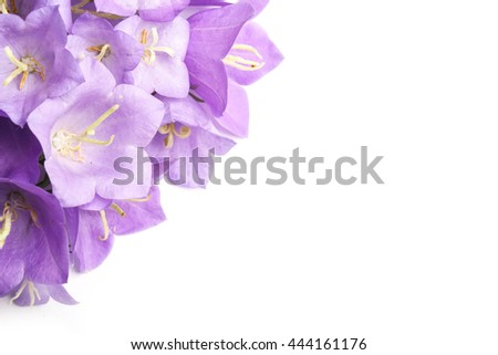 Bluebell flowers close up photography white background with copy space for your text