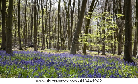 Bluebell wood, Micheldever, Hampshire UK - stock photo