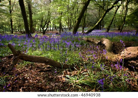 Bluebell woodland floor with fallen branches - stock photo